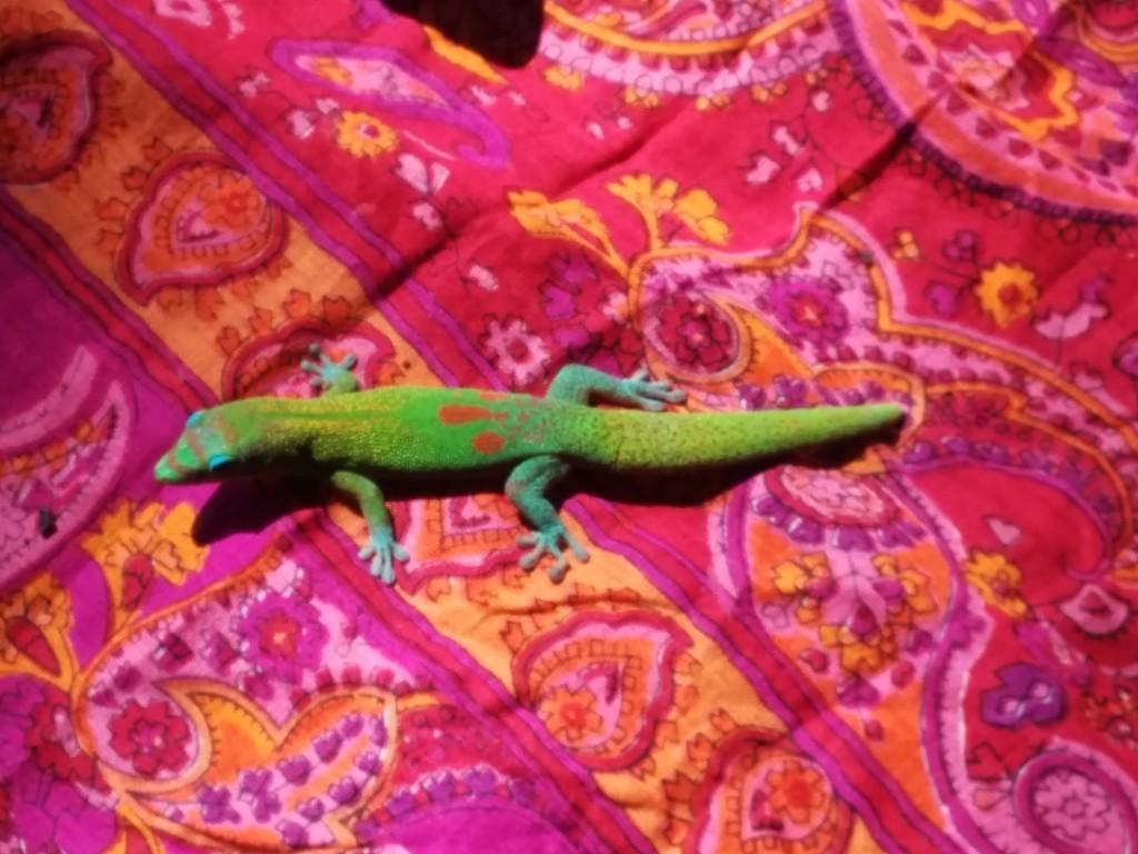 Holistic Travel Green Lizard Totem