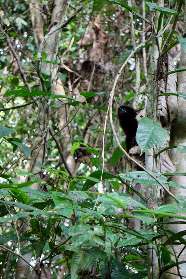 Monkey Jungle Medicine