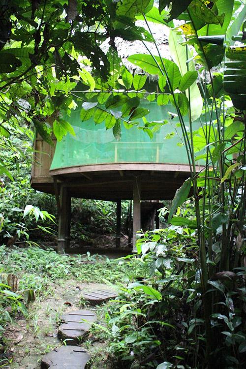 Jungle Medicine tambo-path